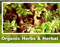 Indian medicinal herbs, medicinal herbs, Indian herbs, natural medicinal herbs
